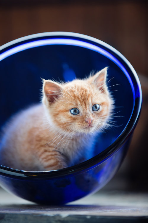 kitten sitting in a bowl